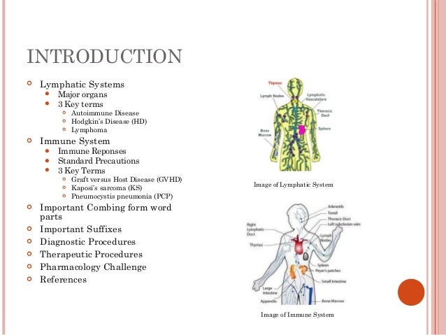 Chapter 6 Lymphatic And Immune System