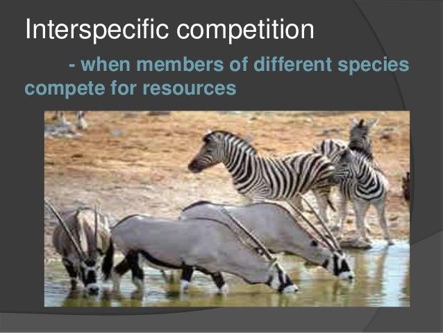 Chapter 6 Ecology: Preserve the Animal Kingdom