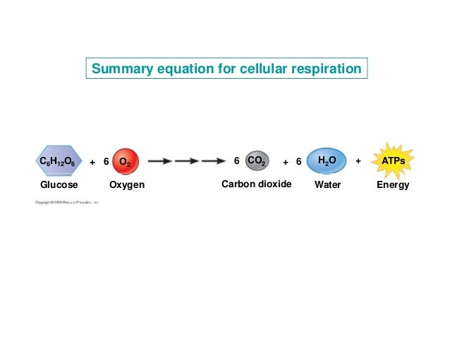 the chemistry behind cellular respiration This lesson will go over the basics of cellular respiration and its chemical equation, discussing how this equation can be balanced and what its.