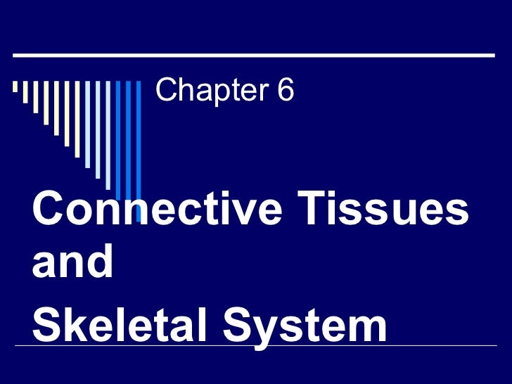 Chapter 6 Connective Tissues and  Skeletal System