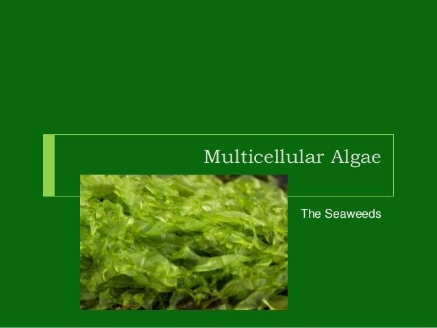 Chapter 6 seaweed.