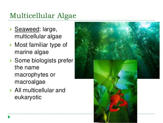 Multicellular primary producers: seaweeds and plants ppt video.
