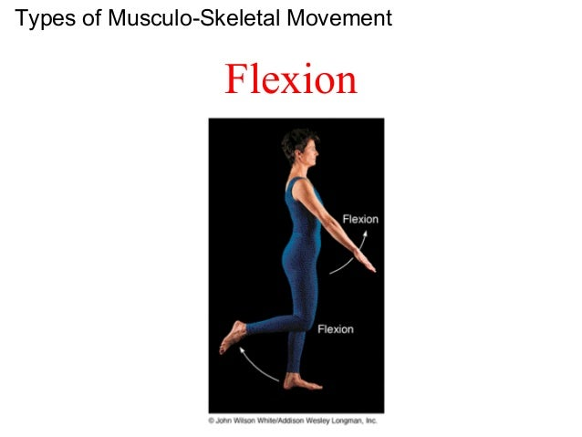 Chapter 6 - The Muscular System