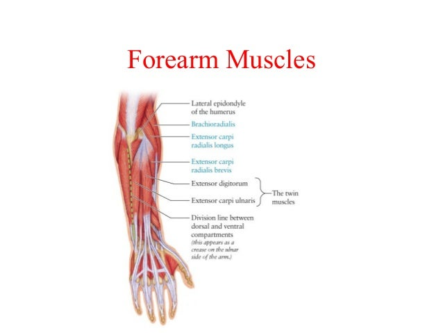 chapter 6 the muscular system rh slideshare net Study Questions Muscular System Man Muscles Anatomy Study Guide