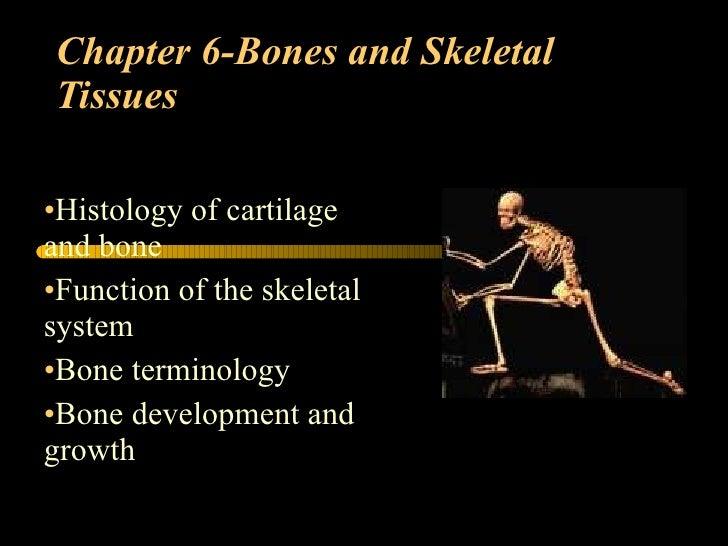 Chapter 6-Bones and Skeletal Tissues <ul><li>Histology of cartilage and bone </li></ul><ul><li>Function of the skeletal sy...