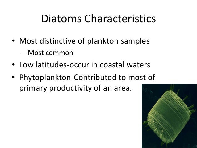 characteristics of diatomssimilarities between diatoms and Most of the species featured on this site belong to one of these two groups there  are several features of a phytoplankton cell that can identify it as a diatom or.