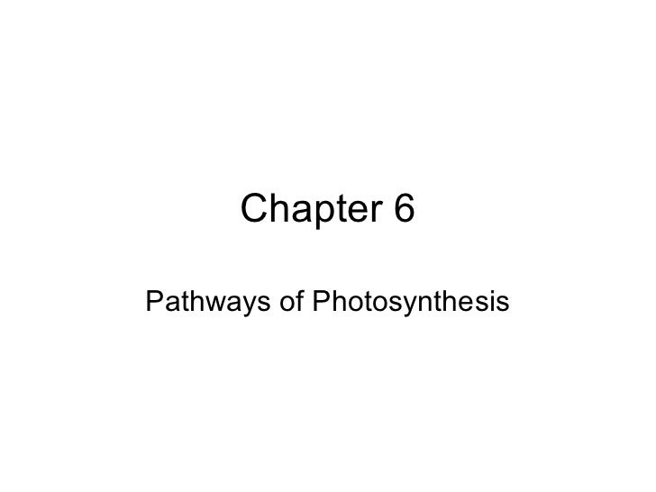 Chapter 6Pathways of Photosynthesis