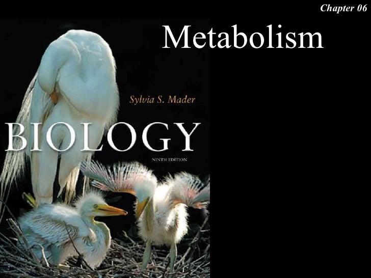 Chapter 06   Metabolism