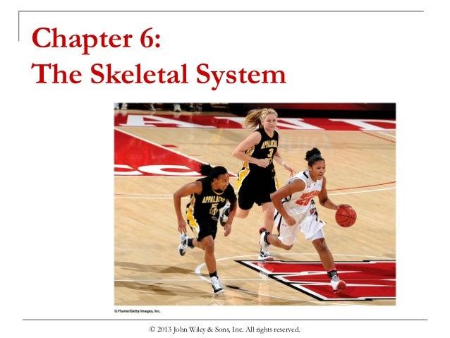 chapter 6 the skeletal system. Black Bedroom Furniture Sets. Home Design Ideas