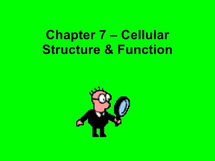 Chapter 7 – Cellular Structure & Function