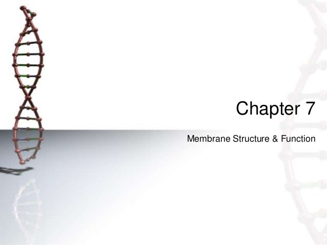 Chapter 7Membrane Structure & Function