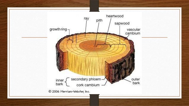 how to show timber in a section
