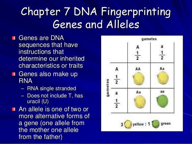 chapter 7 dna fingerprinting