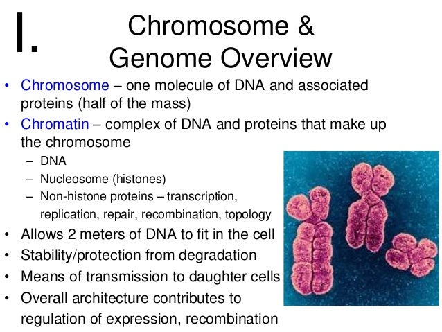 relationship between chromatin chromosomes chromatid and dna
