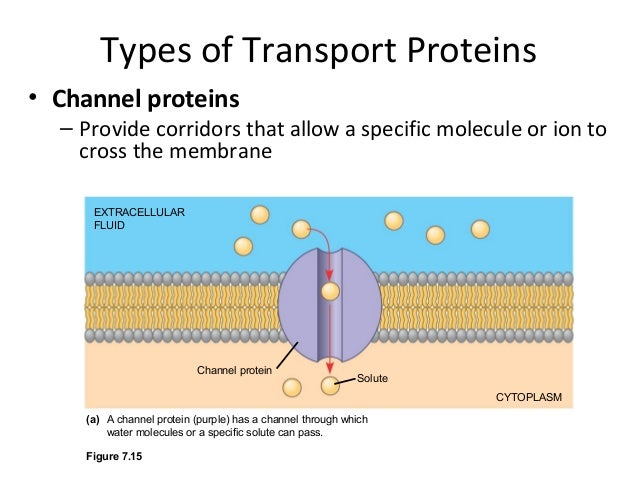 membrane function and structure and Cell transport