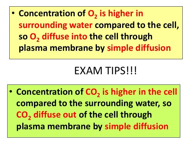 ap bio cellular respiration essay Extra opportunity for ch 41 and 42 exam you may choose to answer up to 3 essay questions from the following if they are answered in your own words, are a minimum of 2 paragraphs each and are answered according to ap standards, you will receive up to 4 points for each question answered.