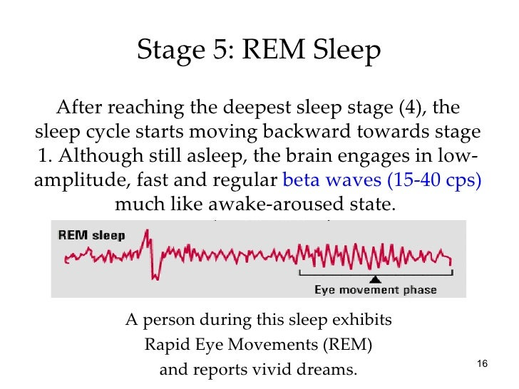 rem sleep essay example Home essays example speech outline example speech outline rapid eye movement sleep pages: 3 (404 words) published: september 25 for example rita hayworth was one of the most popular actresses of that time desired and admired by millions of people.
