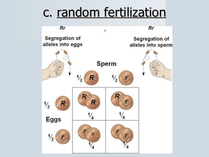 Random Fertilization Diagram