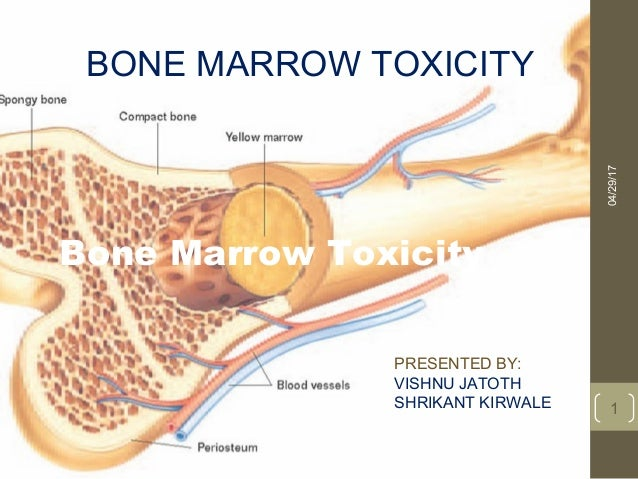 tissue transplant bone marrow essay Five decades ago, the concept of bone marrow transplantation to treat humans  with inherited diseases of  war ii brought research in tissue transplantation to  the forefront: skin grafts were needed for burn  summary the last 40 years  has.