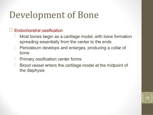 Bone Marrow Toxicity Structure And Function Of Bone Marrow