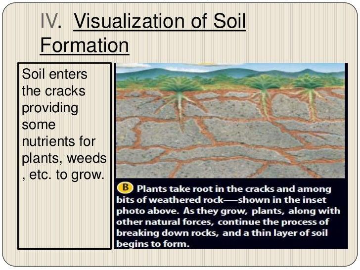 Chapter 7 section 2 nature of soil for Mineral soil vs organic soil