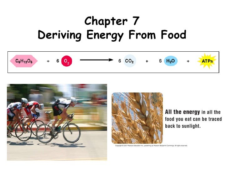 Chapter 7 Deriving Energy From Food