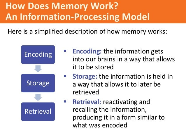 memories encoding storage and retrieval Memory (encoding, storage, retrieval  semantic memory is actually preserved in early-stage alzheimer's disease storagethe kinds of memories listed in the.