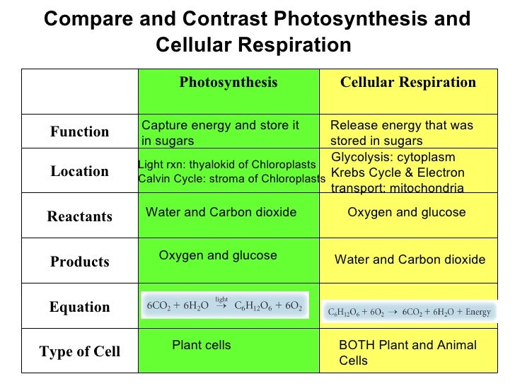 comparison between cellular respiration and photosynthesis Transcript of similarities between photosynthesis and cellular respiration  cellular respiration and photosynthesis both have an atp.