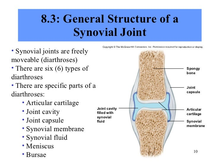 joints notes marieb Elaine n marieb, katja hoehn book cover main author: marieb, elaine nicpon   tissues -- the skeleton -- joints -- muscles and muscle tissue -- the muscular.