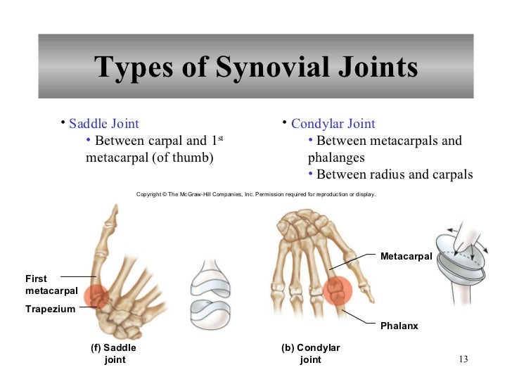 Chapter 8 Joints Of The Skeletal System