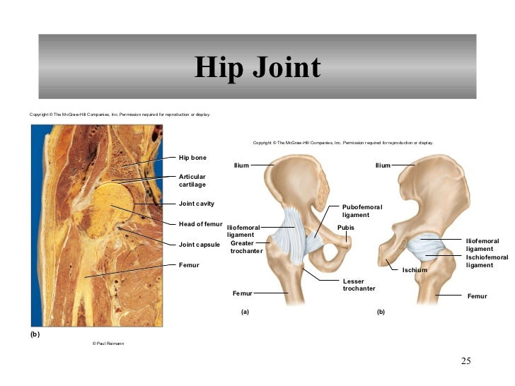 8 Joints Of The Skeletal System