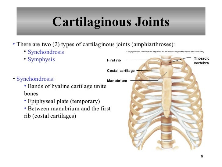 Chapter 8 Joints Of The Skeletal System A synchondrosis is a type of cartilaginous joint where hyaline cartilage completely joins together two bones.1 synchondroses are different than symphyses which are formed of fibrocartilage. chapter 8 joints of the skeletal system