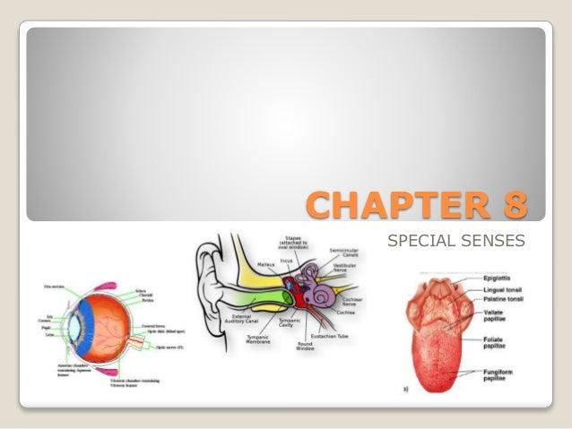 Printables Chapter 8 Special Senses Worksheet Answers – Special Senses Worksheet