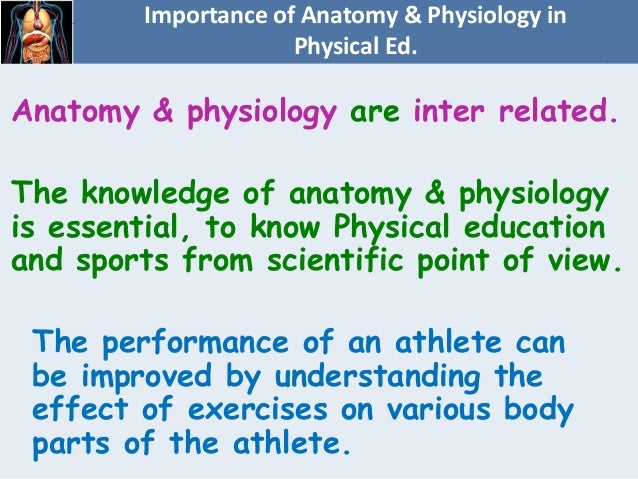 essential anatomy and physiology physical education essay Essential anatomy 3 is designed to be a seamless and fluid 3d experience and excels where other apps fail to deliver 3d4medical custom-built a real time 3d graphics engine in order to maximize the quality of the graphics available as well as to enable as much content to be available on the one screen as possible.