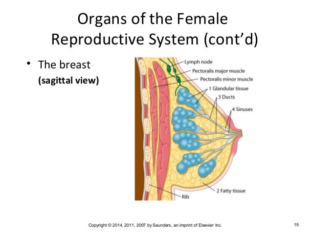 common cancers of the reproductive system What do you know about reproductive cancers cancer can strike any part of the reproductive system, but research has led to better diagnoses, treatments, and a lower chance of death for many of these cancers.