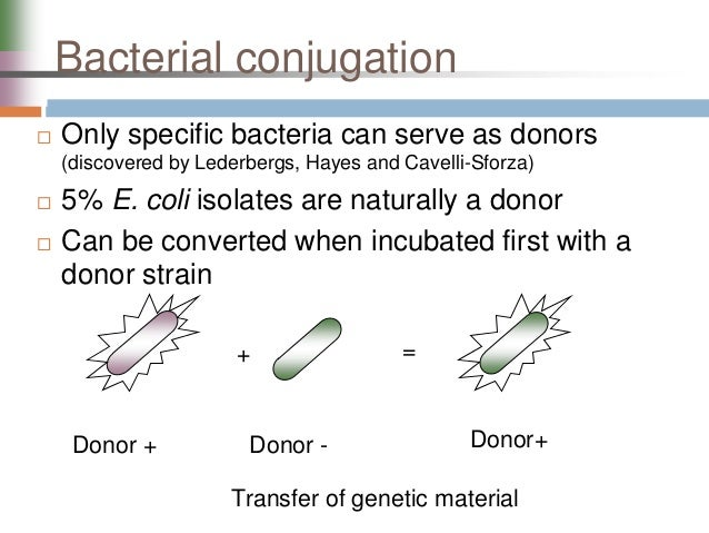 an analysis of the genetic material for virus All viruses bind to their hosts and introduce their genetic material into the host cell as part of their replication cycle this genetic material contains basic 'instructions' of how to produce more copies of these viruses, hacking the body's normal production machinery to serve the needs of the virus.