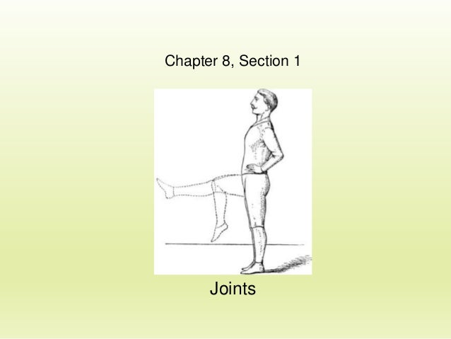Chapter 8, Section 1  Joints