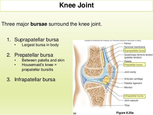 Section 3 Chapter 8 Knee Joint And Joint Disorders
