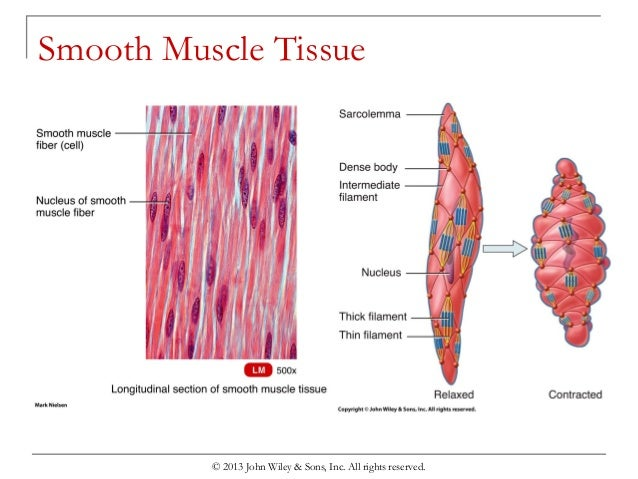 chapter 8 the muscular system, Muscles