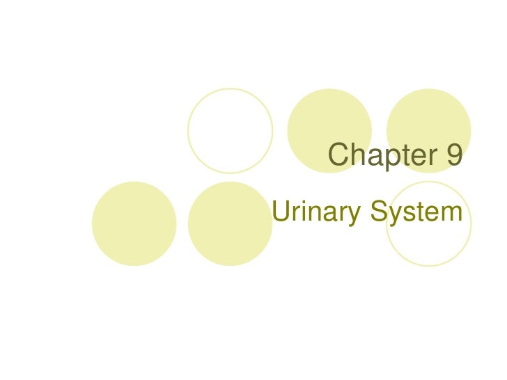 Chapter 9<br />Urinary System<br />