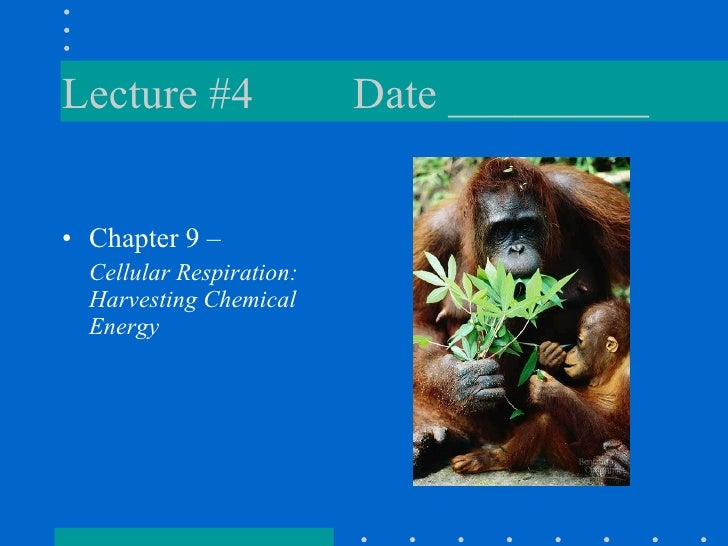Lecture #4 Date _________ <ul><li>Chapter 9 –  </li></ul><ul><li>Cellular Respiration:  Harvesting Chemical Energy </li></ul>