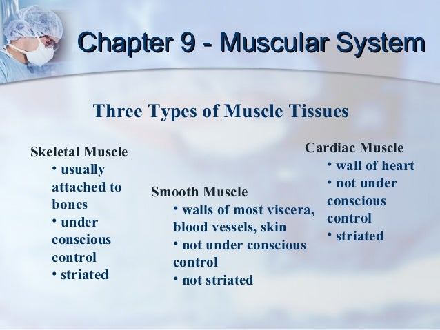 Chapter 9 - Muscular System         Three Types of Muscle TissuesSkeletal Muscle                           Cardiac Muscle ...