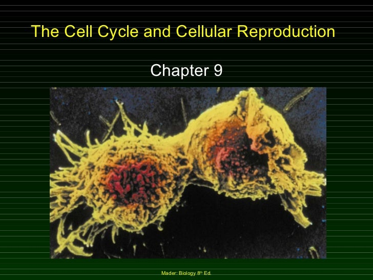 The Cell Cycle and Cellular Reproduction Chapter 9 Mader: Biology 8 th  Ed.
