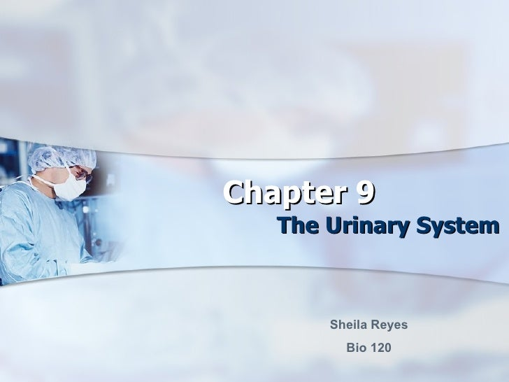 Chapter 9 The Urinary System Sheila Reyes Bio 120
