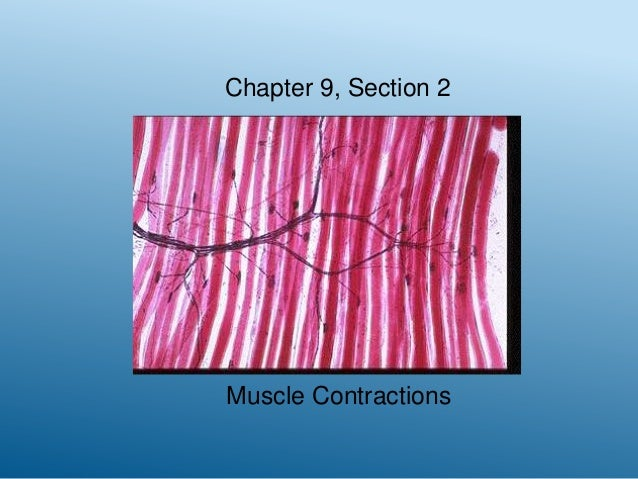 Chapter 9, Section 2  Muscle Contractions