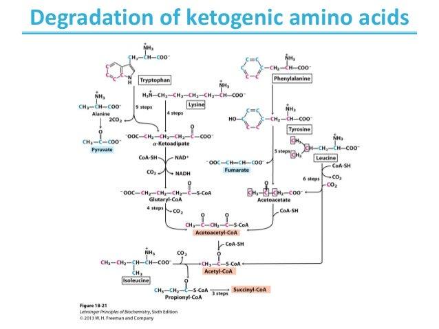 Chapters 18 - Amino acid Oxidation , production of urea Biochemistry