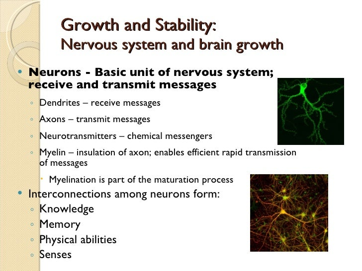 Chapters 4 and 5   life span development.pptx Slide 3