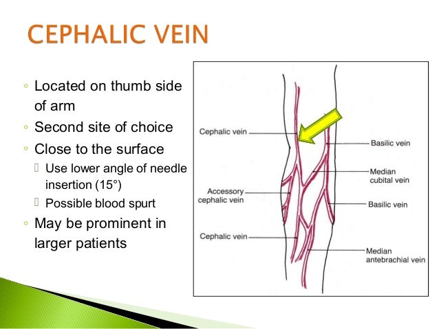 blood collection routine venipuncture, Cephalic Vein