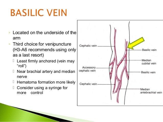 cephalic vein venipuncture – tikuzan, Cephalic Vein