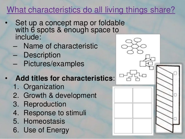 Ch 1 1 Characteristics Of Life 2 What Characteristics Do All Living Things Share